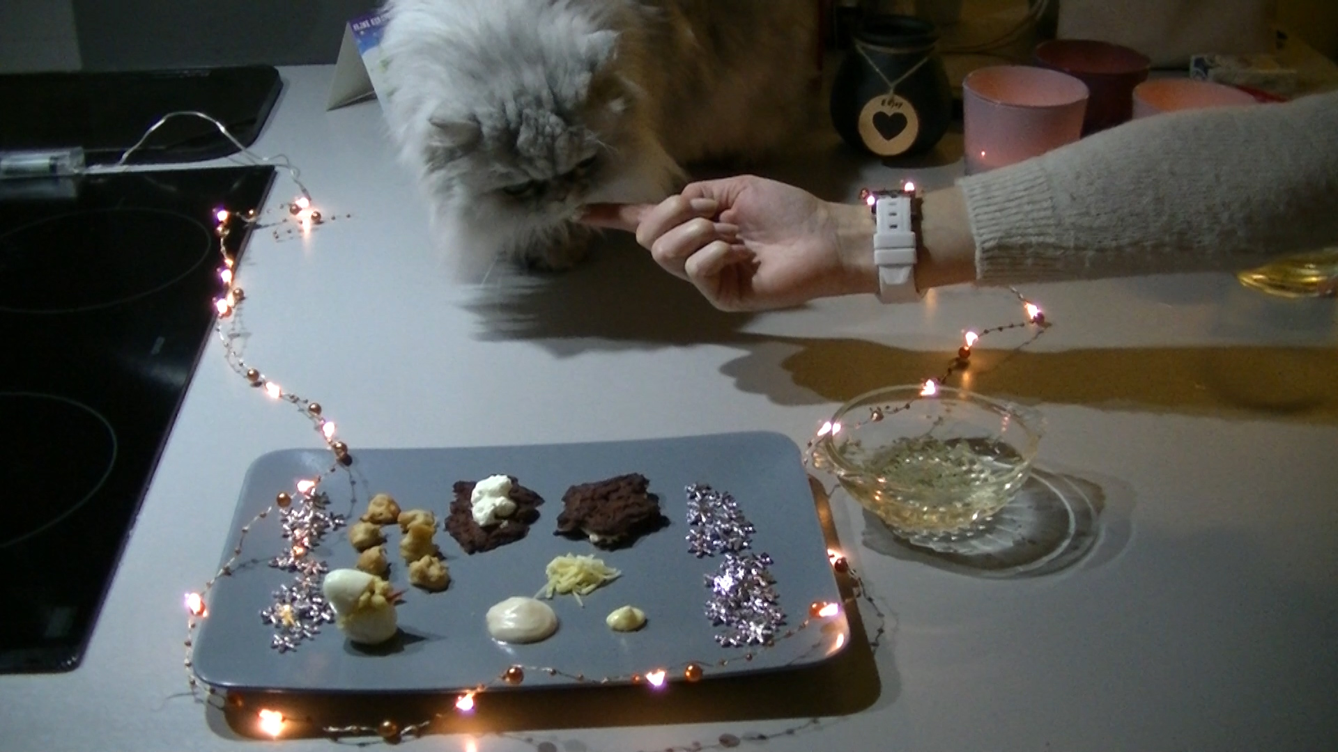 Silver the cat eats catfriendly christmas dinner